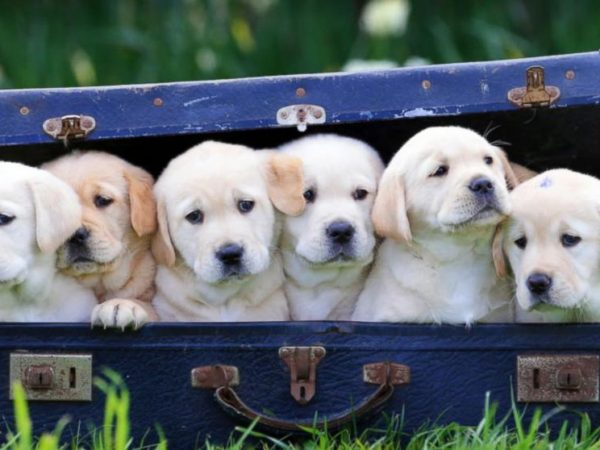 20 Facts about dogs